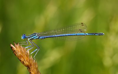 Opening dragonfly data