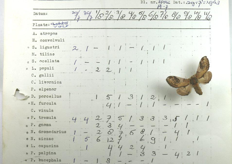 Mobilisatie van Nederlandse vlinderwaarnemingen