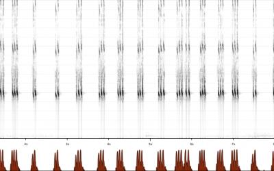 Van Acheta tot zoemertje: Sprinkhaangeluiden op Xeno-Canto en GBIF